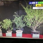 櫻井・有吉のTHE夜会V6森田剛が愛した観葉植物とは?